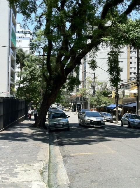 Armadilhas Urbanas – Árvore vai cair