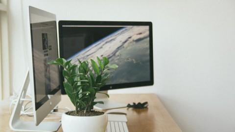 Os benefícios dos elementos naturais para o ambiente corporativo